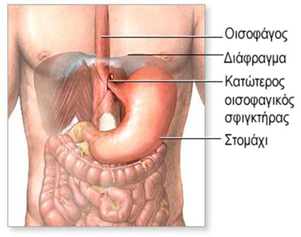 Το ανώτερο πεπτικό σύστημα